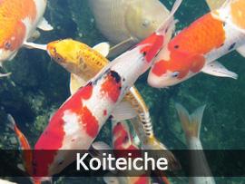 Koiteiche | Bavaria Teichbau