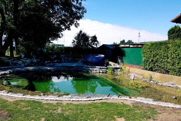 schwimmteiche-dachau-5